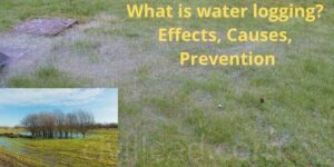 What is waterlogging? Effects, Causes, Prevention